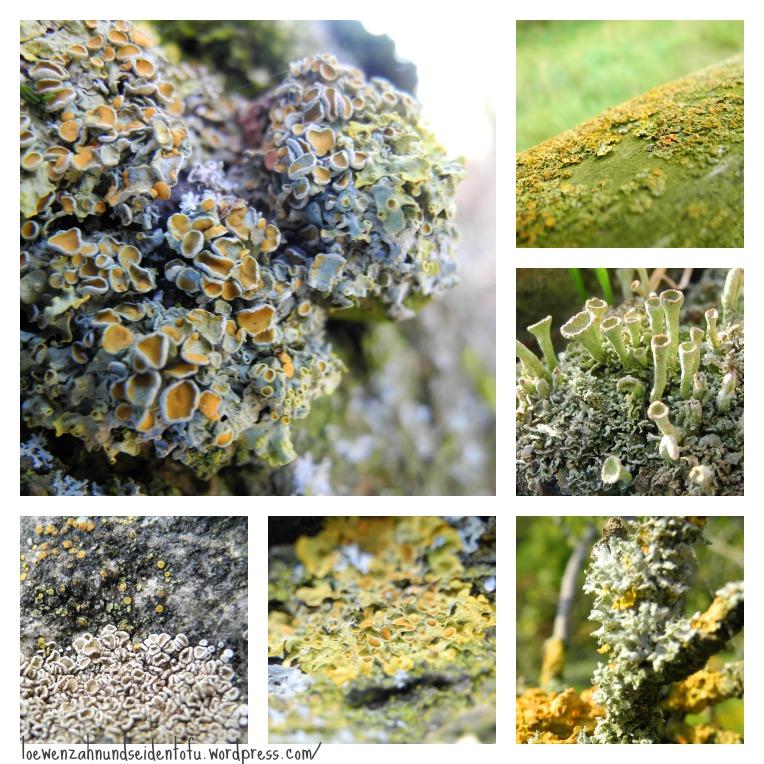 Lichen Collage, Makro fotos lichen, flechten