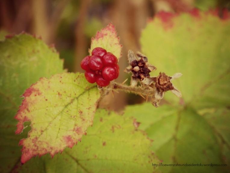 Brombeere im Herbst