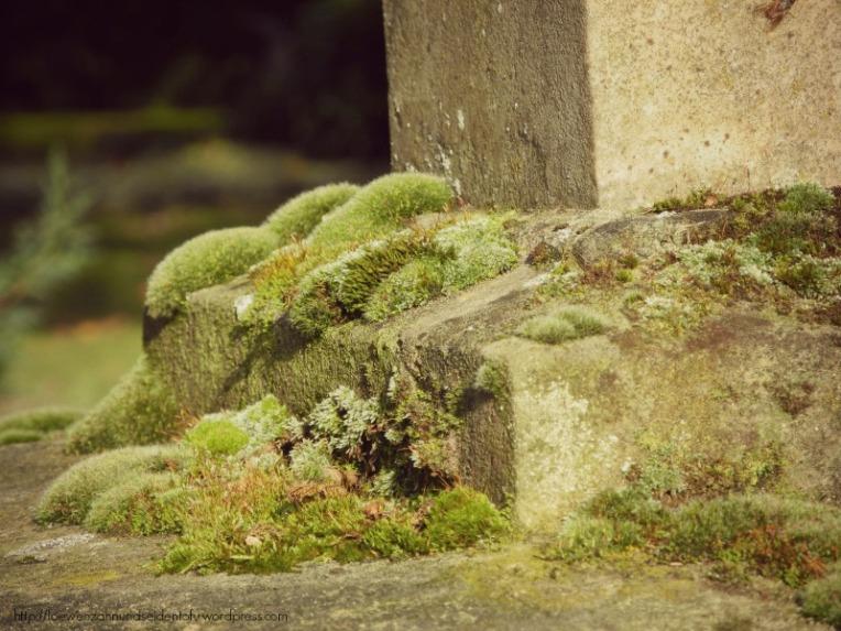 Moos Naturfotografie Friedhof Gütersloh