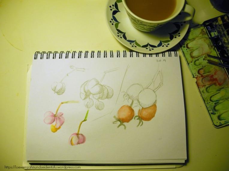 Skizze Pfaffenhütchen