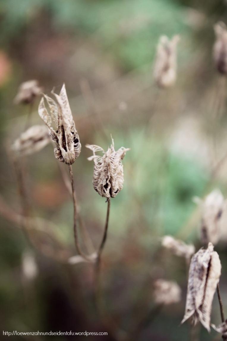 Naturfotografie Akelei Samenkapseln