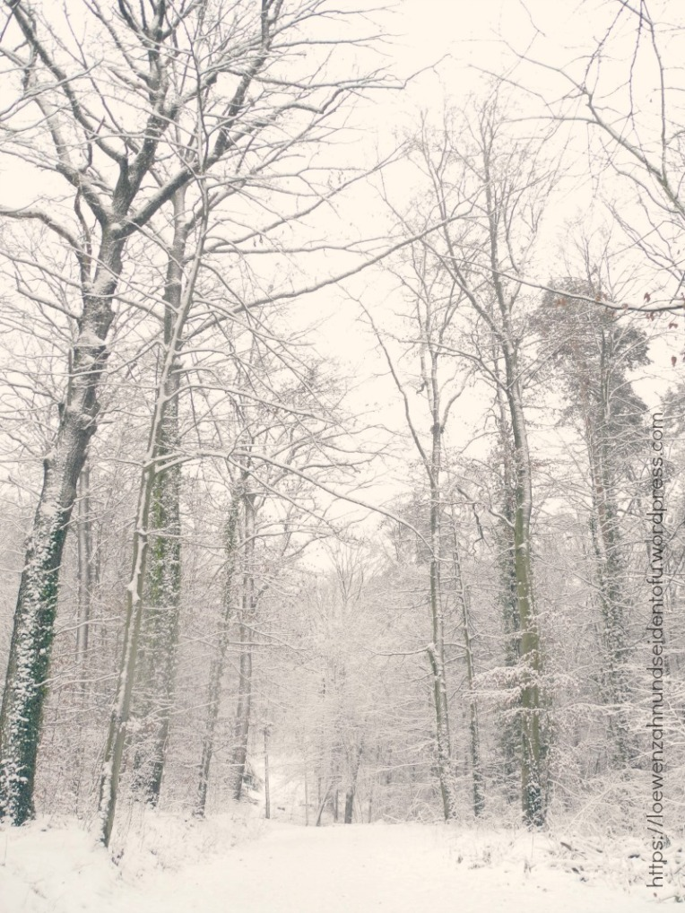 Wald Spaziergang im Schnee