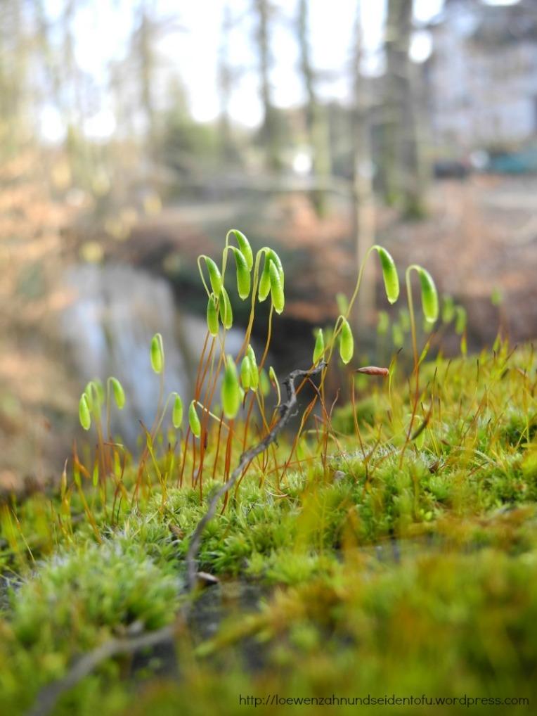 Naturfotografie Moos