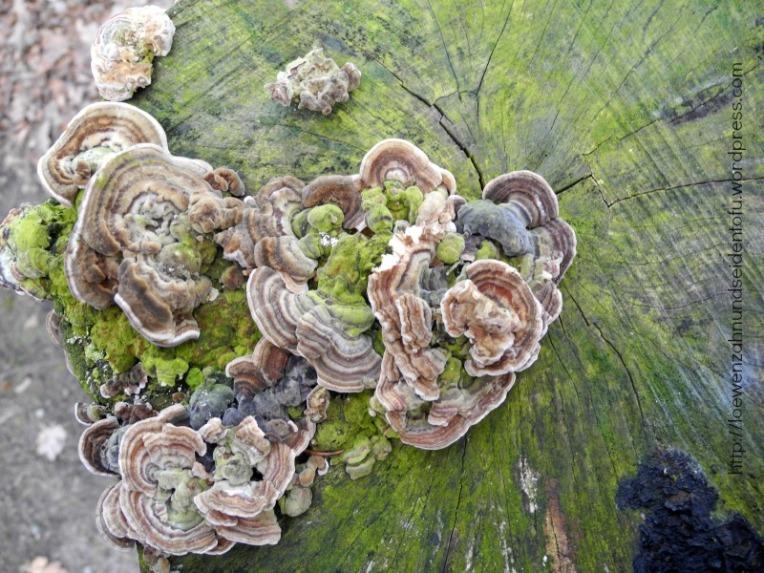 Baumpilze Naturfotografie