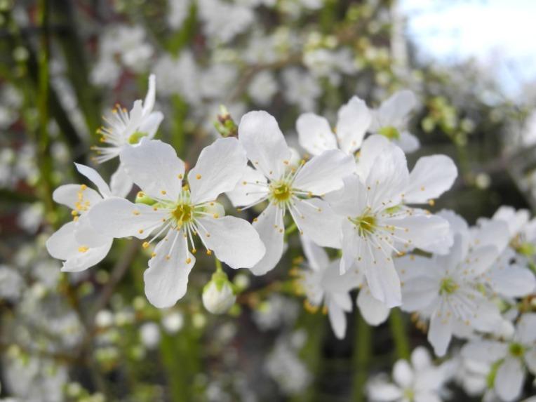 Frühlingsblüher und Natur -  Referenzfotos und Malvorlagen- Was soll ich malen?